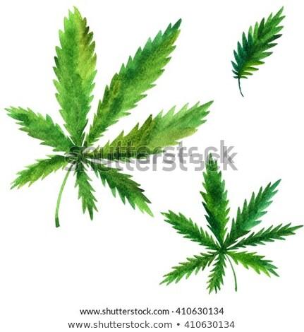 marihuana · hennep · groen · blad · icon · ontwerp · gezondheid - stockfoto © netkov1