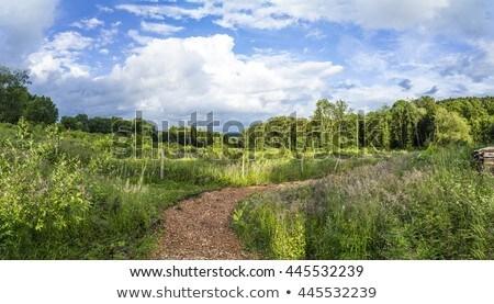 scene in the German hills of the Eifel area near Steinborn Stock photo © meinzahn