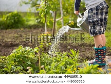 кавказский мальчика завода лейка мало Сток-фото © RAStudio