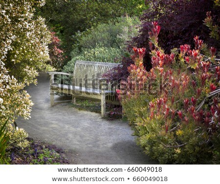 Secluded Park Benches Stock photo © jkraft5