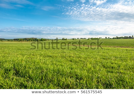 Grassland landscape Stock photo © raywoo