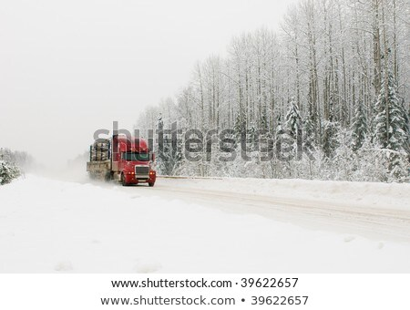 logging road in winter Stock photo © pictureguy
