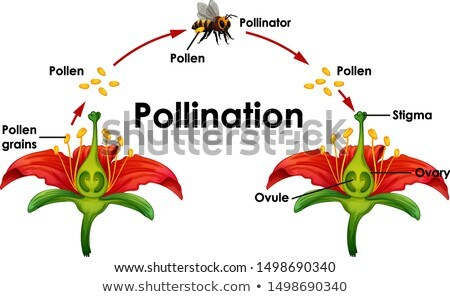 Diagram showing pollination with bee and flowers Stock photo © bluering