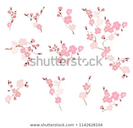 virágzó · barack · közelkép · virágok · kék · ég · fa - stock fotó © cozyta