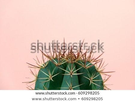 Cactus plantas decoración casa mesa habitación Foto stock © iko