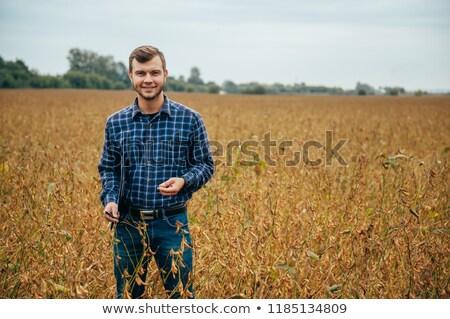 Jeans soja campo sorridente soja planta Foto stock © simazoran