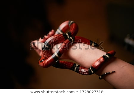 woman holds in her hand the snake stock photo © geribody