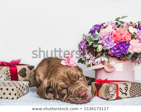 White boxeas and red pits Stock photo © MONARX3D