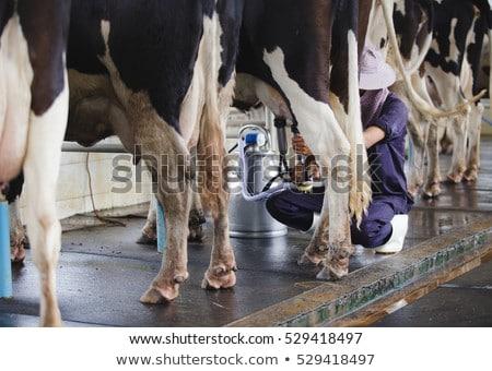 Milkmaid Working Farm with Cow, Farmer with Milk Stock photo © robuart
