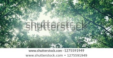 ストックフォト: フライ · 緑 · 自然 · 市 · 中心