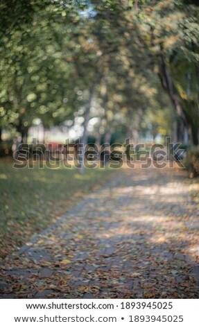 Autumn alley in out-of-focus bokeh Stock photo © zastavkin