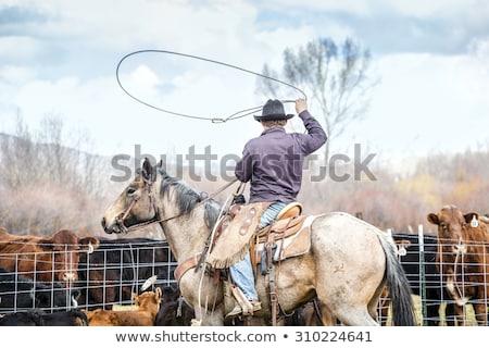 Cowboy lassoing cow Stock photo © Witthaya