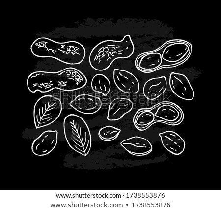 Peanuts on white background. Vector illustration Stock photo © ConceptCafe