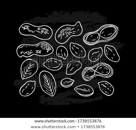Cacahuètes blanche arachide isolé manger publicité Photo stock © ConceptCafe