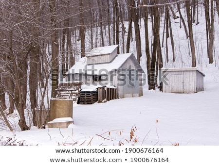 Maple water tubing in a snowy maple forest in winter Stock photo © flariv