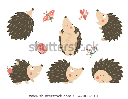 Hedgehog set Stock photo © colematt
