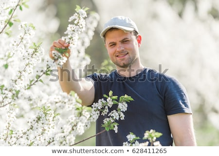 Landbouwer kers boomgaard bomen Stockfoto © simazoran