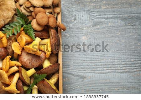 Fából készült doboz különböző ehető gombák természet Stock fotó © dolgachov
