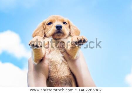 puppy dog blue sky background Stock photo © marimorena