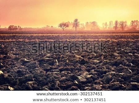 domaine · automne · profonde · pays · automne · sol - photo stock © mycola