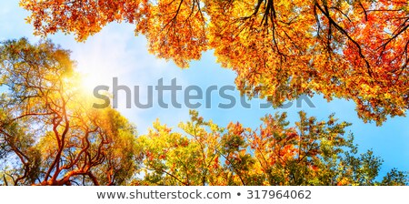 Beautiful colorful autumn trees with blue sky stock photo © meinzahn