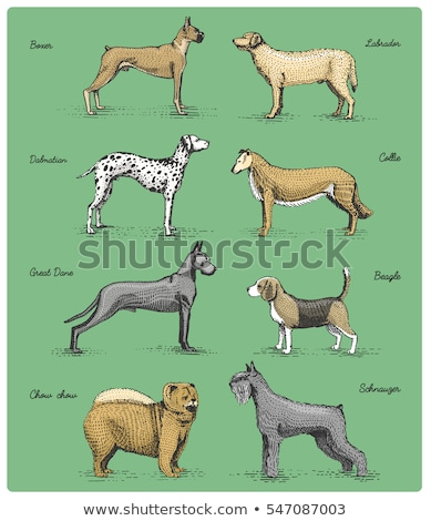 Boxer Dog Breed Cartoon Retro Drawing Stock photo © patrimonio
