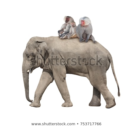 Elefanten Affe spielen drei wenig halten Stock foto © Soleil