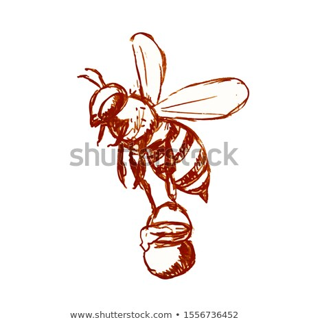 Honey Bee Carrying Pail of Honey Drawing Black and White Stock photo © patrimonio
