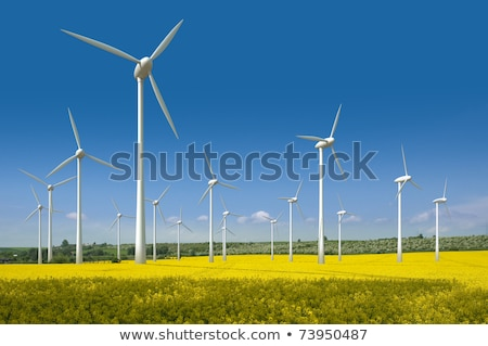 Canola Field With Wind Turbines Stok fotoğraf © visdia