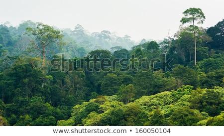 Tropikalnych Rainforest Tajlandia panorama lata dzień Zdjęcia stock © bloodua