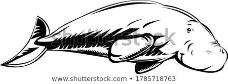 Morskich ssak pływanie strona retro czarno białe Zdjęcia stock © patrimonio
