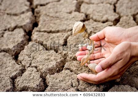 seca · terra · rachado · lago · textura · abstrato - foto stock © ansonstock