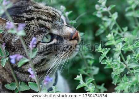 Cat face detail with green eyes and flowers Stock photo © lunamarina