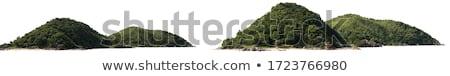 Tree on a hill Stock photo © Saracin