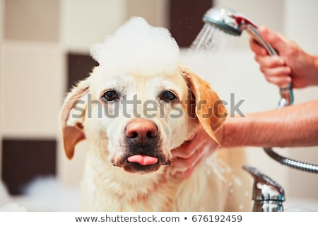 Washing dog Stock photo © Novic