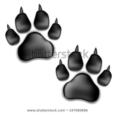 Pantera botón gato fondo signo rojo Foto stock © dagadu