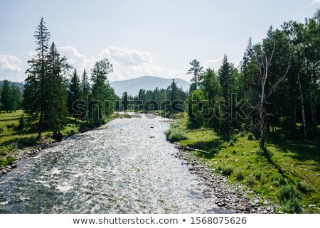 flowing water, nice small creek in wonderful color Stock photo © meinzahn