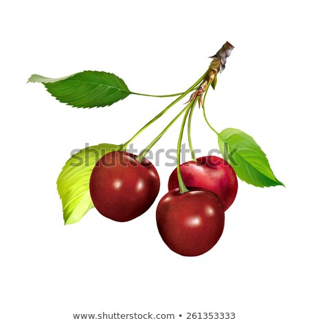 two cherries and branch with leaves stock photo © deyangeorgiev
