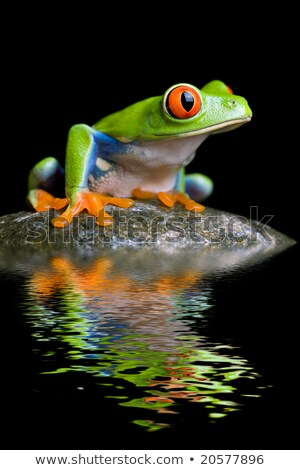 red-eyed tree frog on a rock Stock photo © alptraum