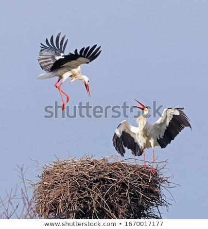 Fehér gólya állatkert néz kívül égbolt Stock fotó © smuay