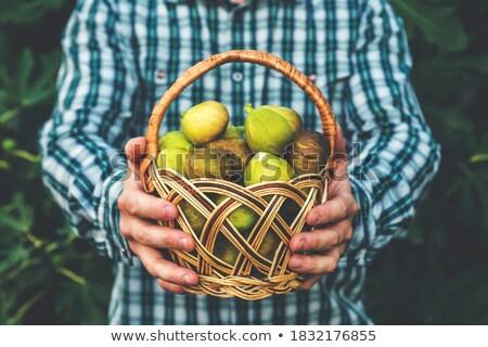ツリー · 支店 · 春 · 日 · 青空 · 食品 - ストックフォト © danielbarquero
