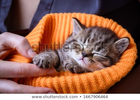 baby with kitten stock photo © runzelkorn