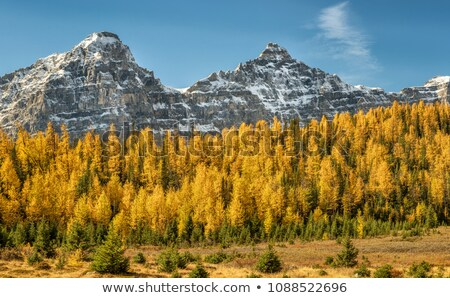 moraine lake yellow mountain landscape stock photo © jameswheeler
