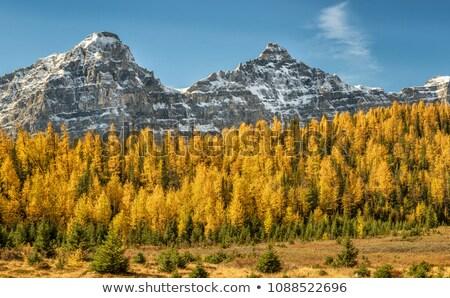 morena · lago · amarelo · montanha · paisagem · manhã - foto stock © jameswheeler