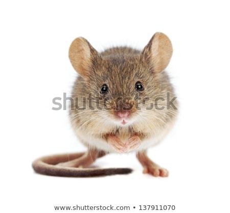 pequeño · ratón · pie · deporte · diversión · jóvenes - foto stock © Norberthos