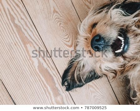 tandheelkundige · gebroken · tanden · kunstmatig · tand - stockfoto © ivonnewierink