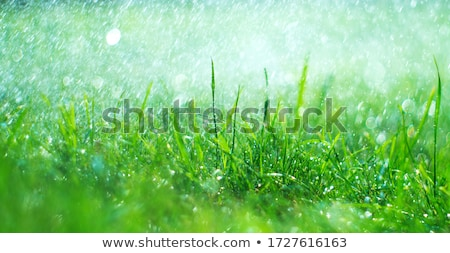 Grass blade with dewdrop on blurred background Stock photo © mahout