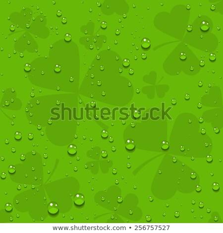 Groene naadloos klaver bladeren transparant druppels Stockfoto © orensila