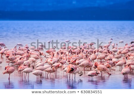 take a walk with a bird Stock photo © wxin