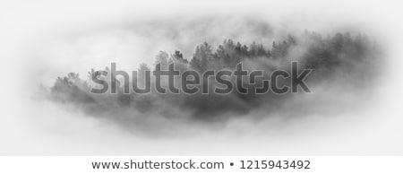Montagnes brouillard dernier ciel nuages forêt Photo stock © krugloff